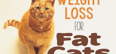 Weight Loss For Cats