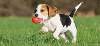 Caring For Your Pup – Puppy Growth