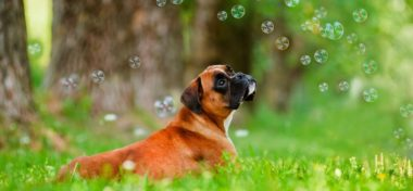 Dog Grooming Tips & Health Care