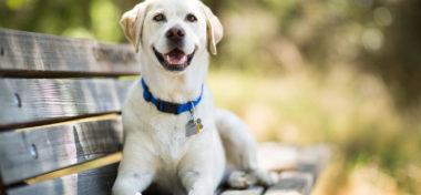 Dog Health Advice and Tips