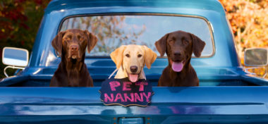 Puppy Care from The Pet Nanny