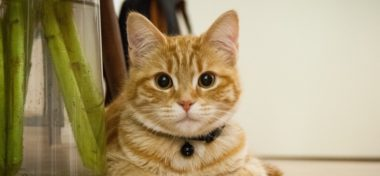 Hyperthyroidism In Cats – 3 Tips to Take Care of Your Pet